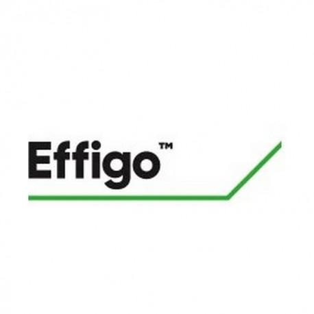 EFFIGO