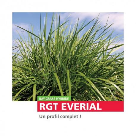 RGH 4N EVERIAL, Ray-grass Hybride
