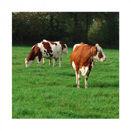 RGA 4N intermédiaire Bio MAJA, Ray-grass Anglais