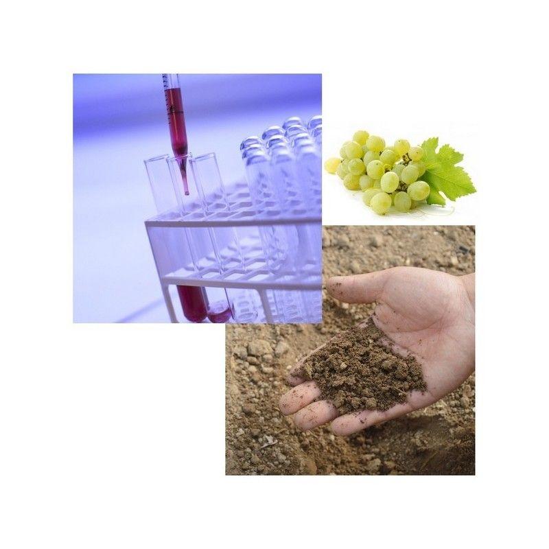 Analyse de terre viticole