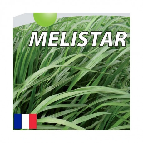 RGI 4N alternatif MELISTAR, Ray-grass d'Italie