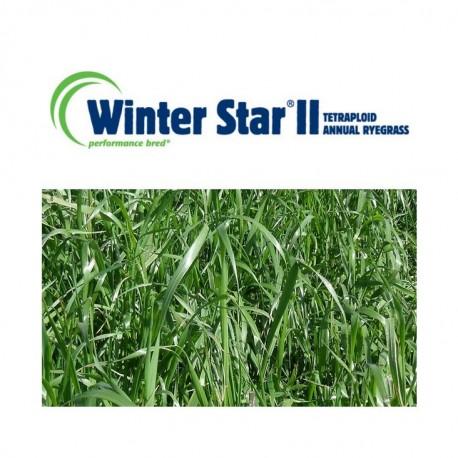 RGI 4N alternatif WINTERSTAR II, Ray-grass d'Italie