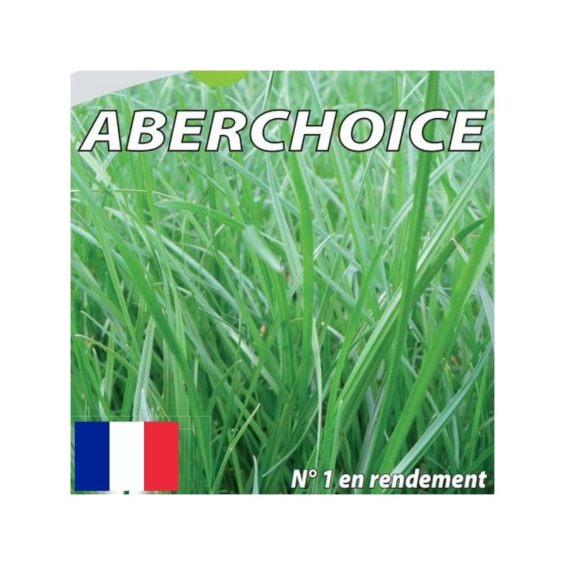 RGA 2N tardif ABERCHOICE, Ray-grass Anglais